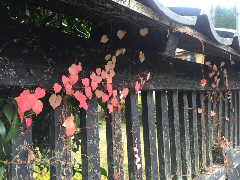 紅葉を求めて阿蘇へ温泉の旅